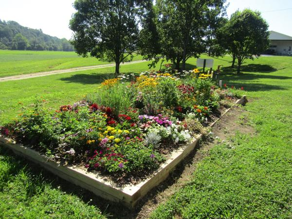 Photo of framed raised bed of multicolored blooming plants