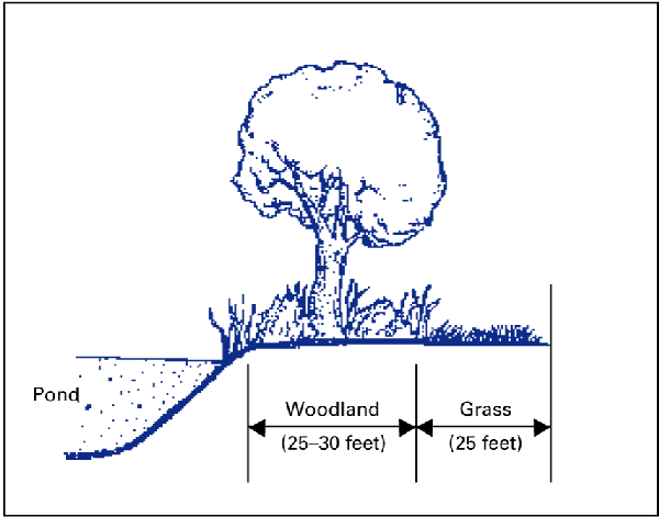 Ppond buffered by 25 to 30 feet of woodland and 25 feet of grass