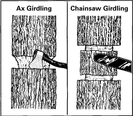 Illustration showing ax girdling and chainsaw girdling