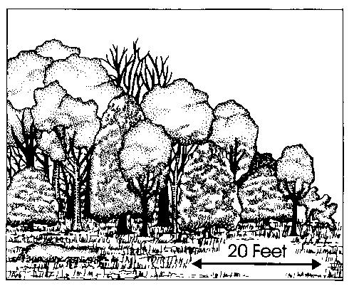 Illustration showing edge planting 20 feet across