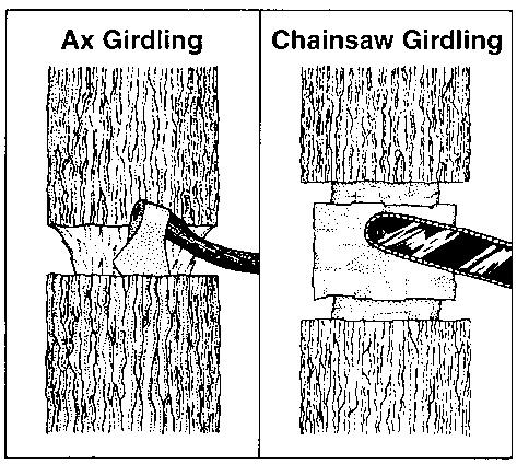 Illustrations of ax girding and chainsaw girding