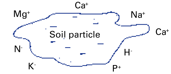 A negatively charged soil particle surrounded by nutrients