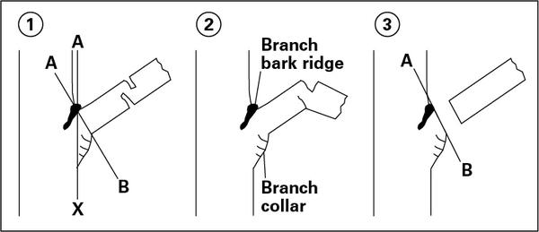 Illustration of pruning in three steps.