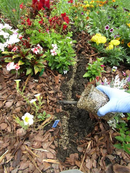 Close-up of hand sprinkling particles in flower bed trench