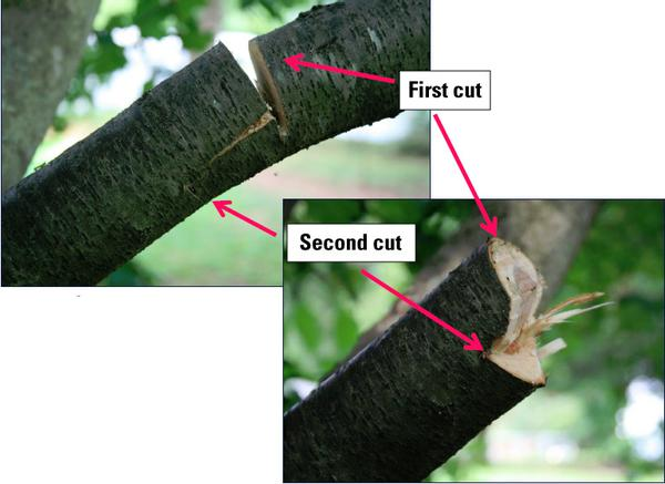 Two close-up shots show where first and second cuts were made