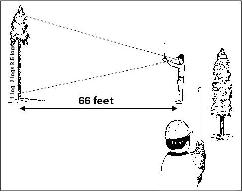 Illustration on how to measure tree height with Merritt hypsomet