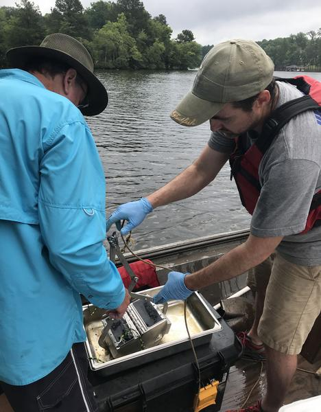 Biology and Control of Non-Biting Aquatic Midges | NC State