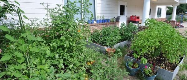 Diverse planting of vegetables, herbs, and ornamental flowers.