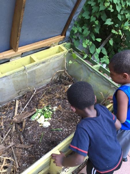 Observing worms in a vermicompost bin.