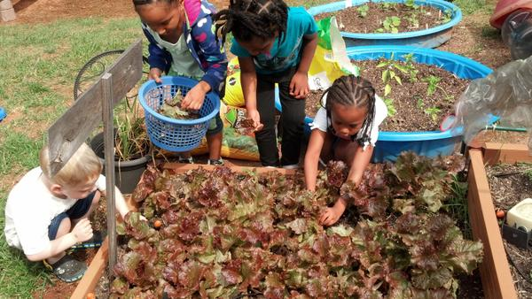 Thumbnail image for Growing Cool-Season Vegetables in Childcare Production Gardens