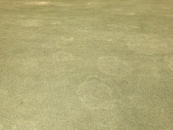 Take-all root rot on an ultradwarf bermudagrass putting green.