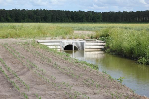 Thumbnail image for Controlled Drainage – An Important Practice to Protect Water Quality That Can Enhance Crop Yields