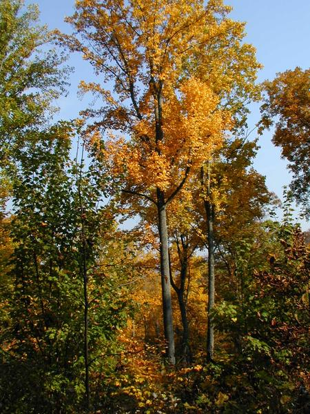 Timber Sales: A Planning Guide for Landowners | NC State