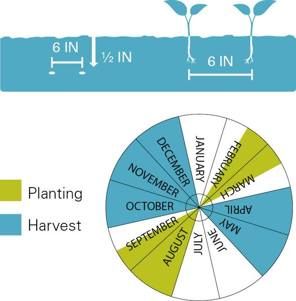 Kale planting and harvest dates.