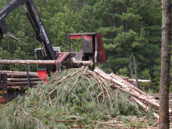 Pile of nutrient-rich limbs ready to be recycled back in forest
