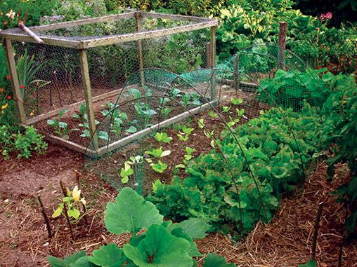 What can i plant in my vegetable garden in august
