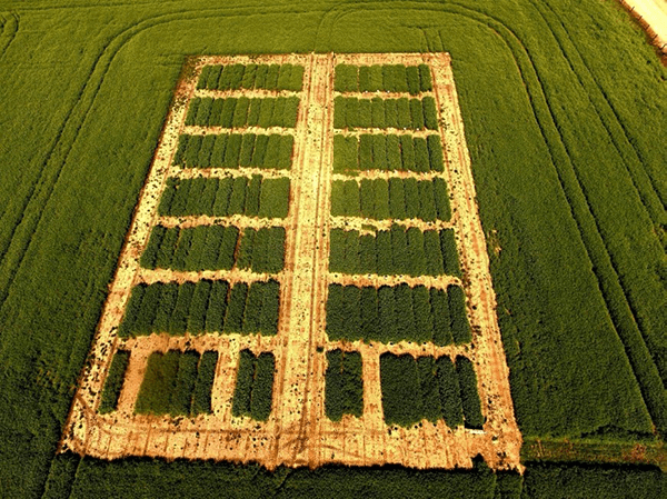 Aerial color photo of grain pea test plots