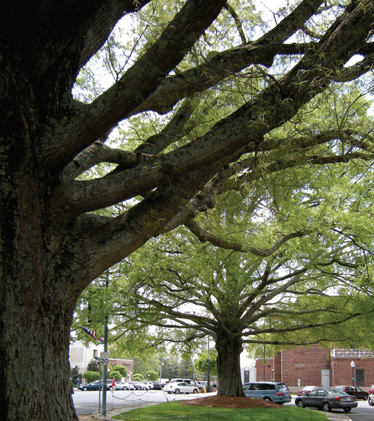 Thumbnail image for Protecting and Retaining Trees: A Guide for Municipalities and Counties in North Carolina