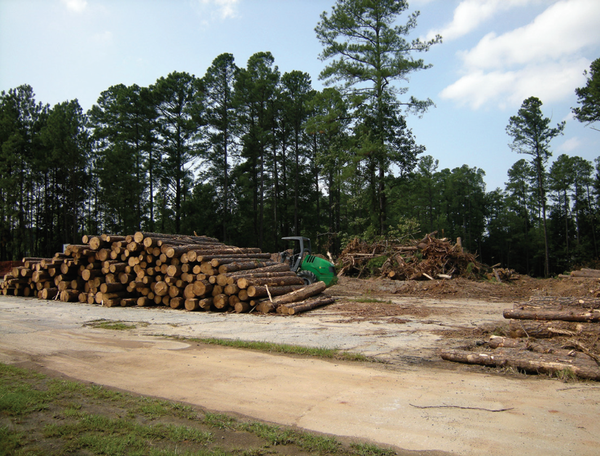Photo of cut down tree logs
