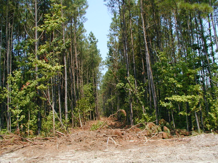 Photo of a commercial thinning operation