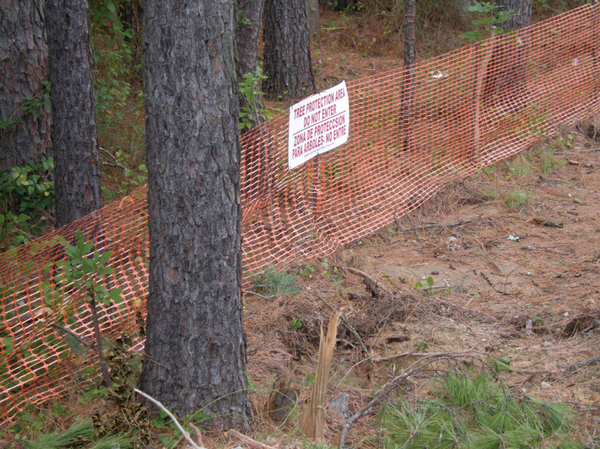 Photo of tree protection area