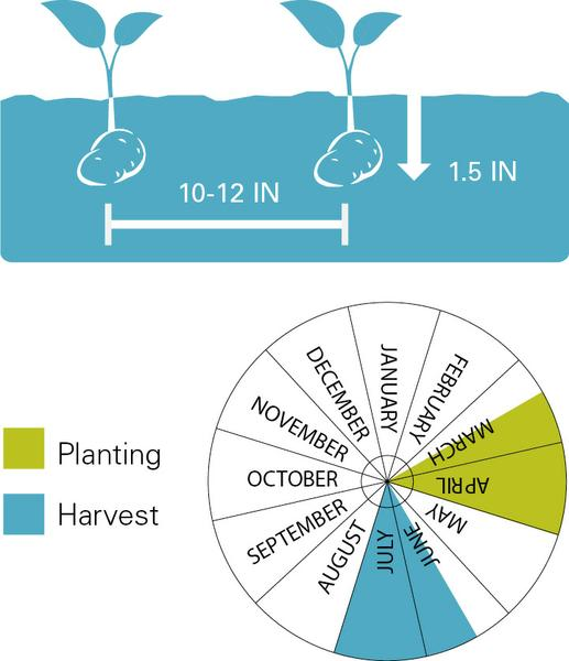 Potatoes planting and harvest dates.