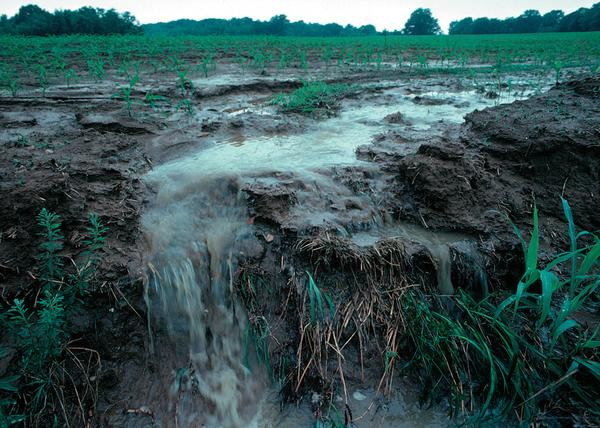 A picture showing erosion of topsoil and rainwater runoff