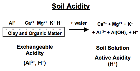 Figure 1. Diagram of exchangeable acidity.