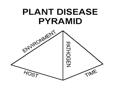 Figure 1. Disease pyramid.