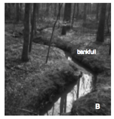 Figure 2b. Photograph of a stream showing bankfull as the top