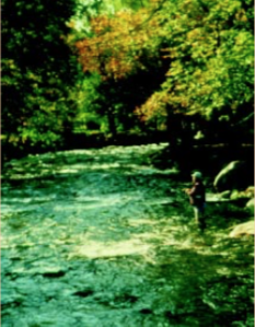 Figure 9. Basin: French Broad. Stream Type: C4.