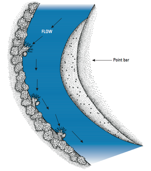 Fig 4. Root wads should be installed on the outside of the meand