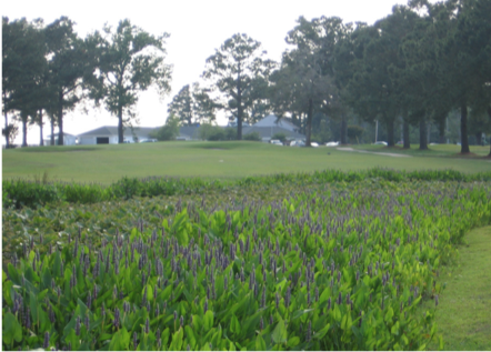 Thumbnail image for Stormwater Wetlands for Golf Courses