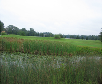 Figure 10. A more natural wetland look, away from playing areas.