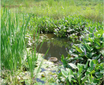 Figure 8. Stormwater wetland in western North Carolina.