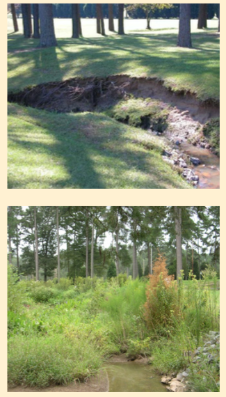 Figure 5. Eroding drainage ditch turned wetland