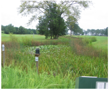 Figure 11. Wetland area with a thick border.
