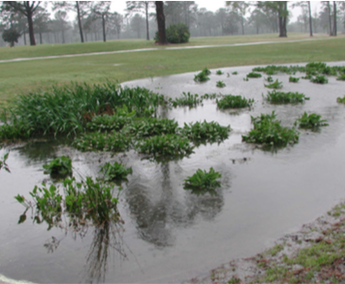 Figure 13. Wetlands can provide temporary storage for stormwater