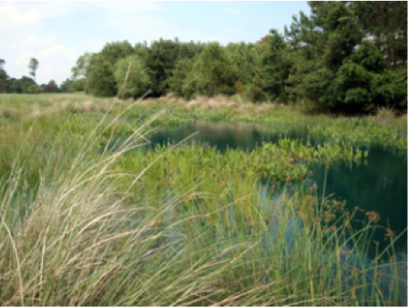 Thumbnail image for Stormwater Wetland Construction Guidance