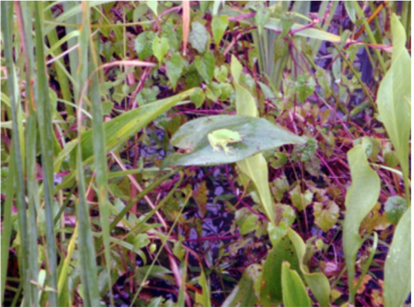 Mature plants beautify a stormwater wetland.