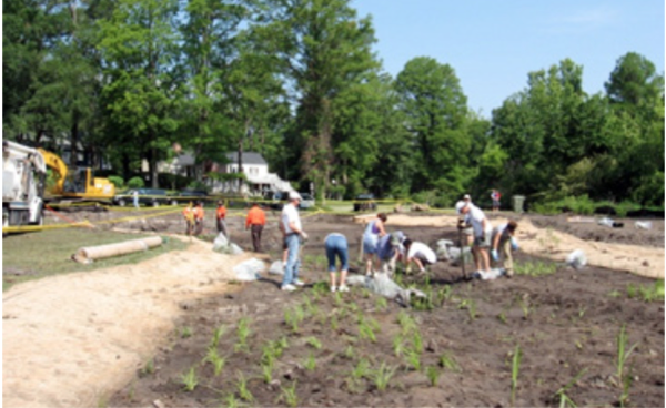 Figure 17. Planting a stormwater wetland can be a community volu