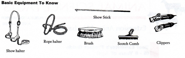 Basic equipment for beef cattle showmanship.