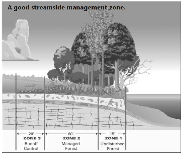 Streamside management zone.
