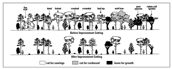 Before improvement a forest contains poor quality stems and spec