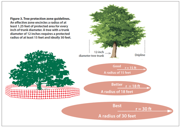 Illustration of tree protection radius