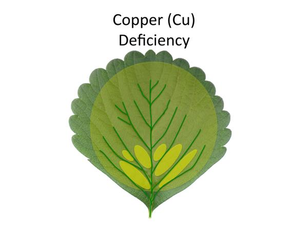 Depiction of copper (Cu) deficiency.