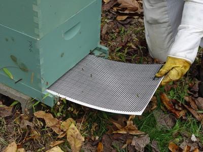Managing Varroa Mites in Honey Bee Colonies | NC State
