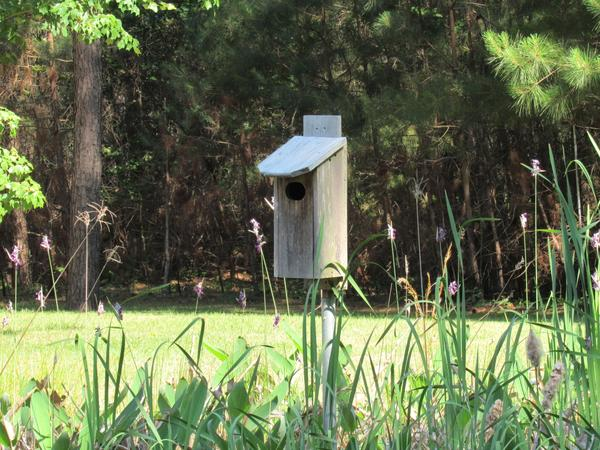 Photo of birdbox erected on edge of ideal wetland habitat