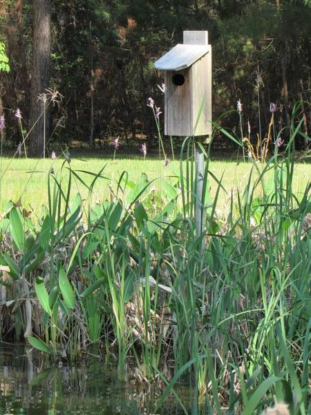 Photo of wood duck box placed at edge of pond