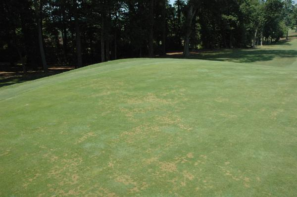 Thumbnail image for Anthracnose in Turf